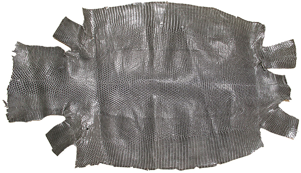 トカゲ原皮
